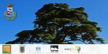 Due giornate all'ombra del Cedro del Libano